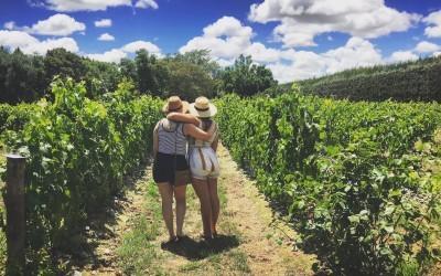 Best NZ Day Trips: Martinborough Vineyards