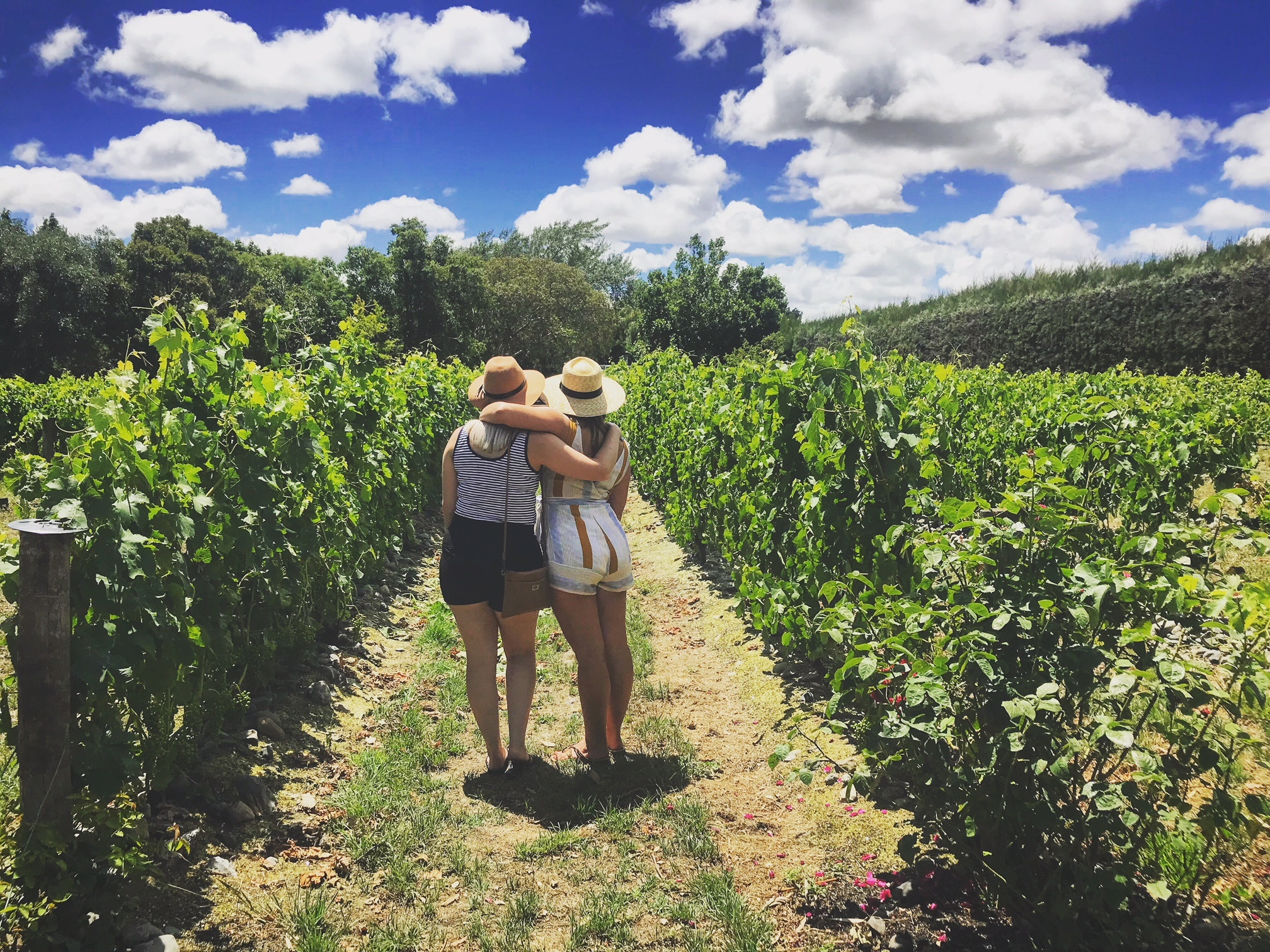 Best NZ Day Trips: Martinborough Vineyards