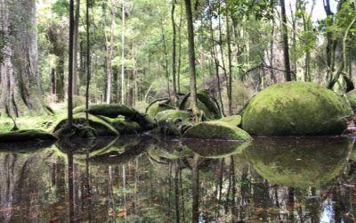 Best NZ Day Trips: Whitecliffs Boulders Mangaweka