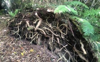 Best NZ Day Trips; Bushy Park Sanctuary, Whanganui