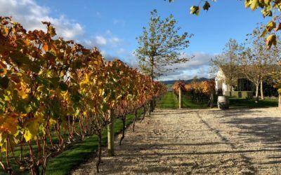 Must Do NZ: Poppies Winery Martinborough