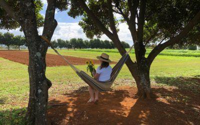 Brisbane Day Trips: Farm & Co Kingscliff