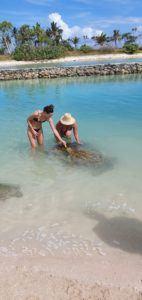 Vanuatu turtles